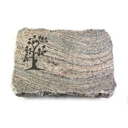 Indisch Black Pure Baum 1
