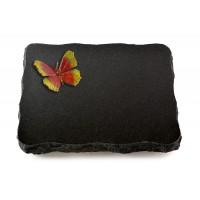 Indisch Black Pure Papillon 1 (Color)