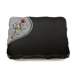 Indisch Black Folio Rose 6 (Color)
