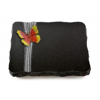 Indisch Black Strikt Papillon 1 (Color)