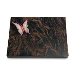 Aruba Pure Papillon 1 (Color)