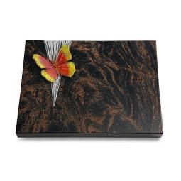 Aruba Delta Papillon 2 (Color)