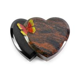 Amoureux/Aruba Papillon 2 (Color)