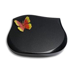 Cassiopeia/Indisch-Black Papillon 1 (Color)