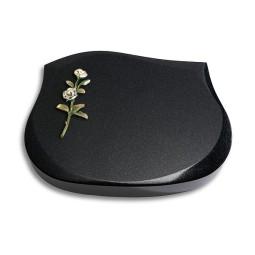 Cassiopeia/Indisch-Black Rose 7 (Color)