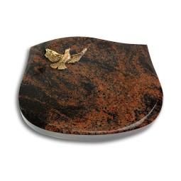 Cassiopeia/Indisch-Black Taube (Bronze)