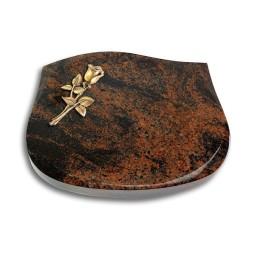 Cassiopeia/Indisch-Black Rose 8 (Bronze)