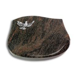 Cassiopeia/Indisch-Black Taube (Alu)