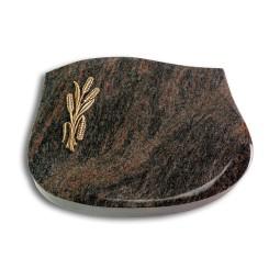 Cassiopeia/Aruba Ähren 1 (Bronze)