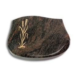 Cassiopeia/Aruba Ähren 2 (Bronze)