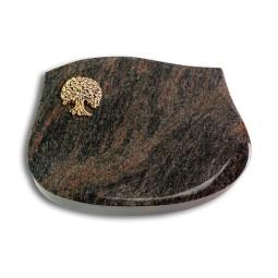 Cassiopeia/Aruba Baum 3 (Bronze)
