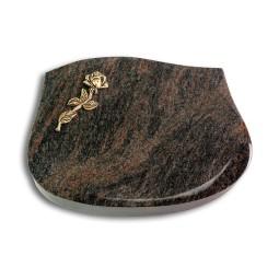 Cassiopeia/Aruba Rose 7 (Bronze)