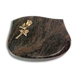 Cassiopeia/Aruba Rose 8 (Bronze)