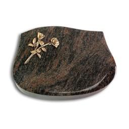Cassiopeia/Aruba Rose 10 (Bronze)