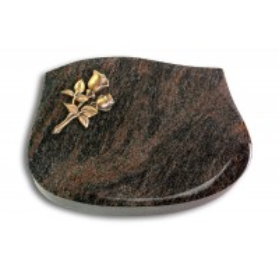Cassiopeia/Aruba Rose 11 (Bronze)