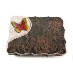 Barap Folio Papillon 1 (Bronze)