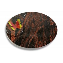 Yang/Indisch-Impala Papillon 2 (Color)