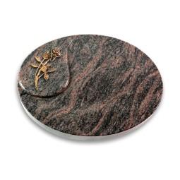 Yang/Aruba Rose 6 (Bronze)