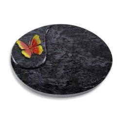 Yang/Kashmir Papillon 2 (Color)